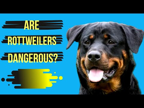 Rottweilers: Are They Dangerous or (Loyal Family Companion)?