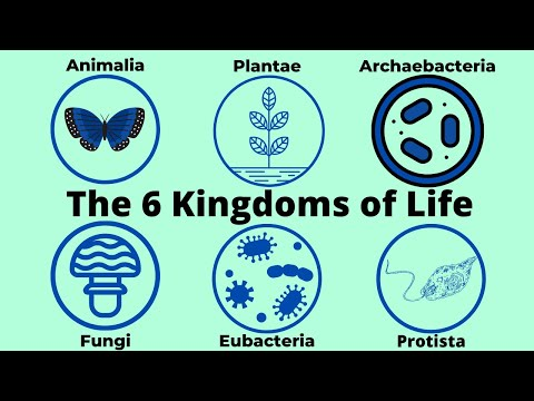 Basic Taxonomy-6 Kingdoms of Life-Classification