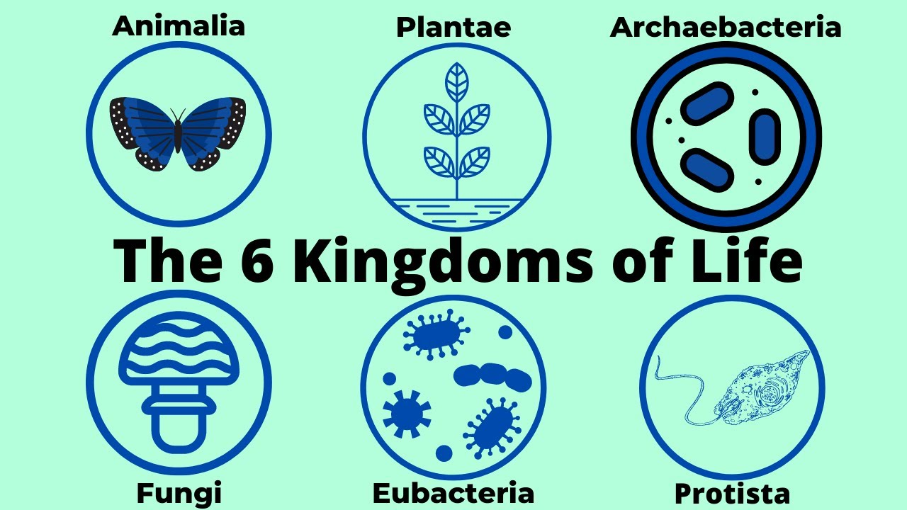 Basic Taxonomy 6 Kingdoms Of Life Cl Ification
