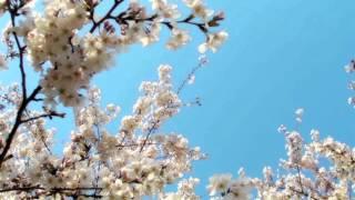 幸福な春に(フルートとギターのための) - 藤井大史