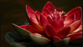 Susheela Raman - Blue Lilly Red Lotus
