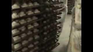 VIDEO SITEP FERRARA Diversi tipi di impasto