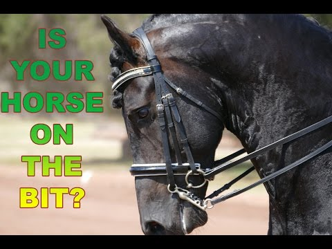 How To Get Your Horse On The Bit (Without Pulling) - Dressage Mastery TV Ep4