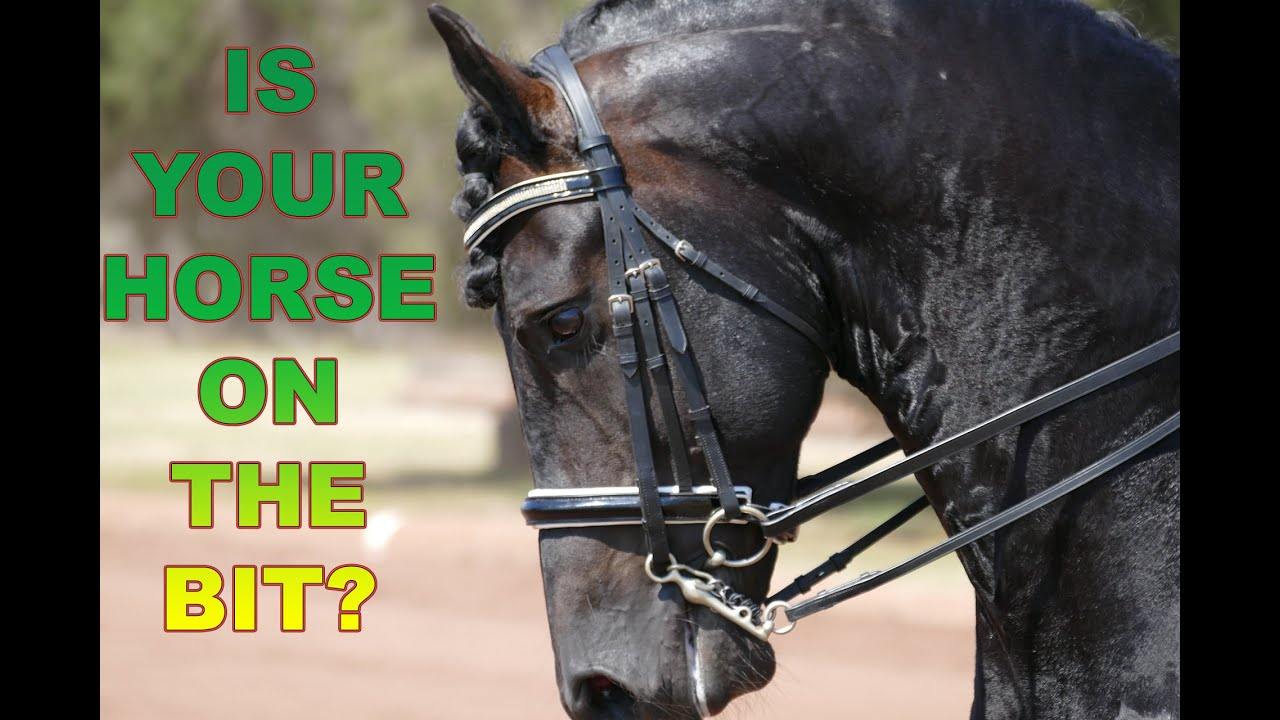 How To Get Your Horse On The Bit (without Pulling)  Dressage Mastery Tv  Ep4  Youtube