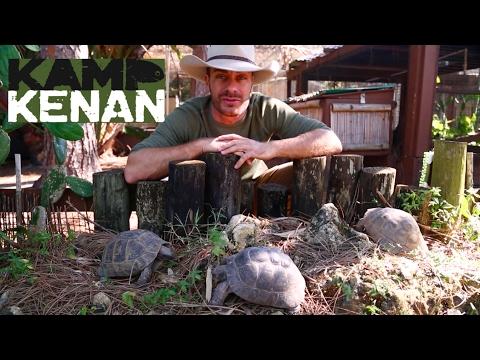 Ultimate Greek Tortoise Care Tutorial!