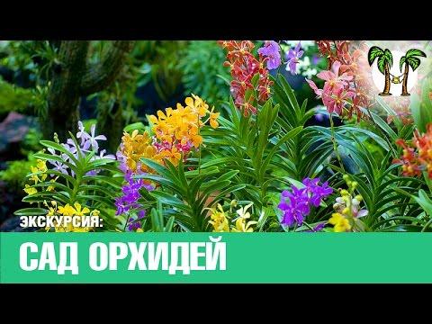 САД ОРХИДЕЙ НА ПХУКЕТЕ, сады, орхидеи Таиланд | PHUKET ORCHID GARDEN