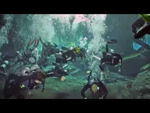 Go Sidemount | Underwater Harlem Shake