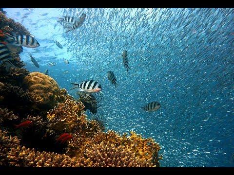 Côn Đảo : Lặn ngắm san hô Côn Đảo