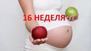 Что происходит на 16 неделе беременности