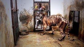 Zoobesuchern wird es schlecht, wenn sie diese Tiere zu Gesicht bekommen!