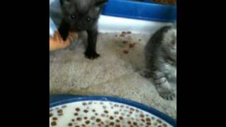 PURR Babies eating lesson