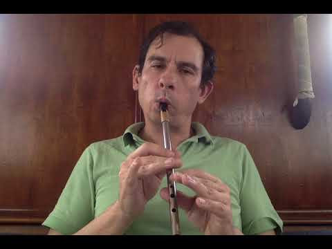 Shoe the Donkey | Tin Whistle
