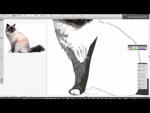 Priscilla The Burman Cat
