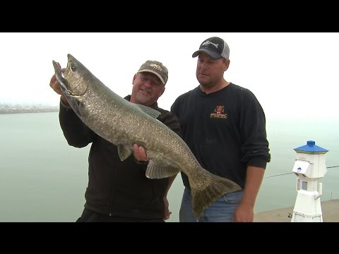 HUGE Fall Salmon Fishing From Shore