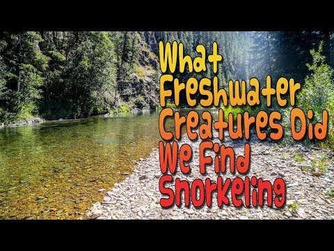 Freshwater Animals That Live In Rivers And Streams - Freshwater Creatures Of The Northwest