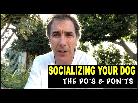 Socializing Your Dog - the do's and don't - Robert Cabral Dog Training Video