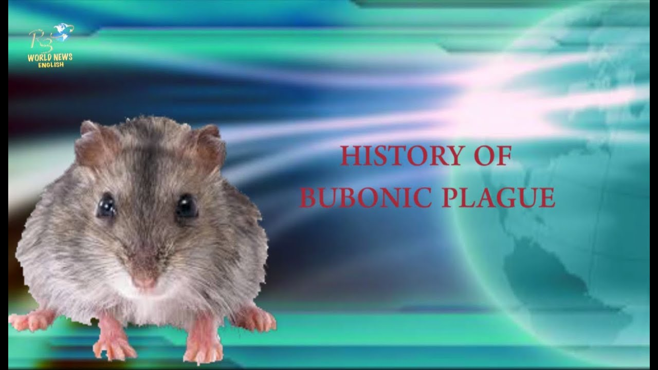 || Meaning of Bubonic Plague ||Bubonic Plague||what is ...