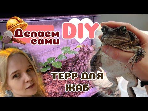 Простой вариант террариума для жабы: делаем вместе.