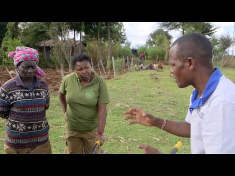 Shamba Shape Up Sn 06 - Ep 12  Tomatoes, Conservation Agriculture, Post Harvest Storage (Swahili)