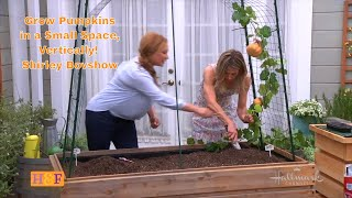 Grow Pumpkins in Small Space Vertically! Shirley Bovshow
