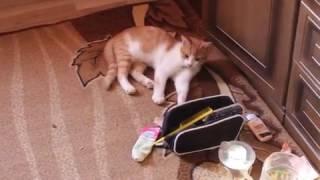 мой 1 ролик кот