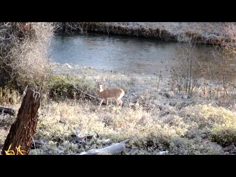 This is What Most Hunters Get Wrong About Deer Hunting - Deer & Deer Hunting TV, Full Episode from YouTube · Duration:  21 minutes 39 seconds