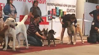 Видео с выставки собак в Курске