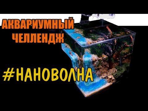 #НАНОВОЛНА / АКВАРИУМНЫЙ ЧЕЛЛЕНДЖ / НАНОАКВАРИУМ СВОИМИ РУКАМИ