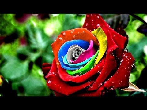 Самые Красивые Цветы Мира / Невероятная Подборка