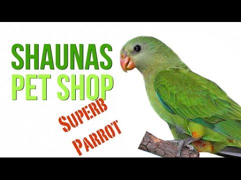 Shaunas Pet Shop: Superb Parrot