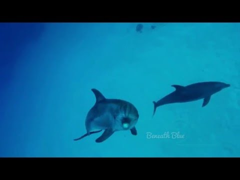 """Swimming with dolphins"" relaxing underwater video 4K Ultra HD UHD"