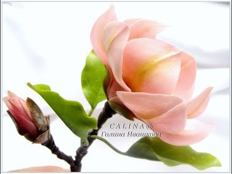 Интернет магазин комнатных цветов и растений (живые и