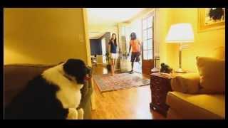 Fort Collins Dog Trainer Oliver Obedience Aggression Denver Boulder Greeley