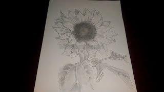 Download 57 Gambar Bunga Matahari Arsiran HD Paling Keren