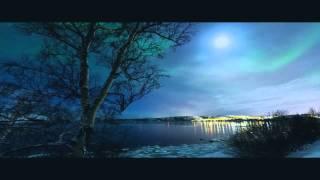 Лесной олень с видео movie
