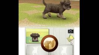 Nintendo 3DS Citra Emulator Nintendogs + Cats - Toy Poodle & New Friends Game Play
