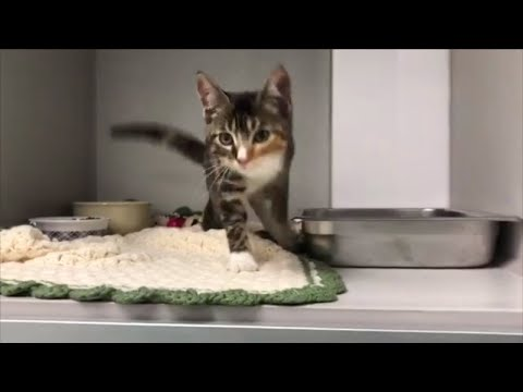 Thumbnail: The Reason Why This Cat Can't Stop Twerking