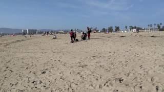 Прогулка вдоль Тихого океана на пляже Venice Beach, in Los Angeles. Вещают Толян и Вован :)