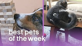 Best Pets of the Week (August 2019) Week 4 | The Pet Collective Video