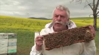 Leatherwood Honey - Australian Honey Products