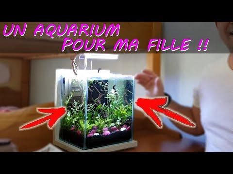 AQUARIUM NANO POUR FILLE [AQUASCAPING & BETTA SPLENDENS] Aquariophilie by Aqua zen