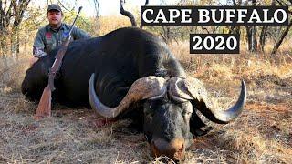 Cape Buffalo Hunt 2020