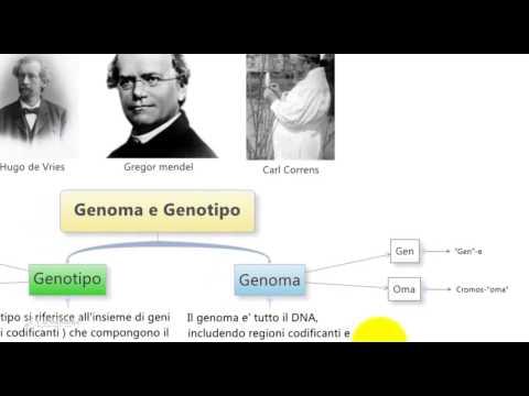 Differenza tra: Genotipo, Genoma e fenotipo per il test di medicina