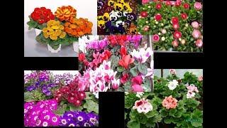 Что можно вырастить с семян на 8 марта и сроки посева.