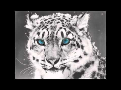 Shearwater - The Snow Leopard [ lyrics ] - YouTube | 480 x 360 jpeg 15kB