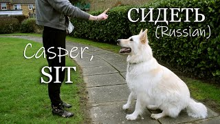 HOW TO TRAIN A DOG IN TWO LANGUAGES | ENGLISH & RUSSIAN | BILINGUAL FAMILY