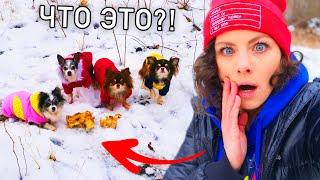 Download Собаки снова нашли в лесу это! Гуляю с собаками, Миша потерялась и мы её нашли, когда она ела ВЛОГ Mp3 and Videos