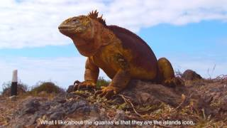 The Galapagos Marine Iguana introduced by Jasmin from Ecuador