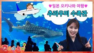 유라 장난감 toy 일본 오키나와 여행 츄라우미 수족관 아쿠아리움 돌고래 물고기 고래상어 japan okinawa travel aquarium dolphin