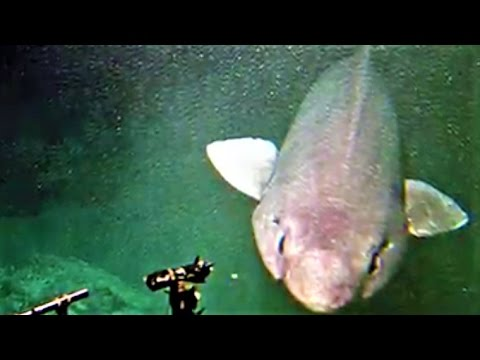 14 Rarest Sharks in the World